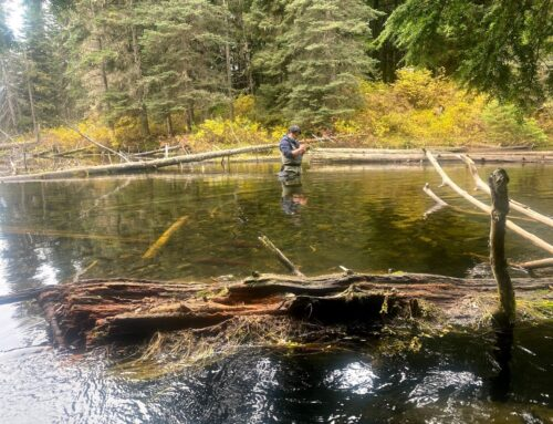 Salmon Stock Assessments and Monitoring